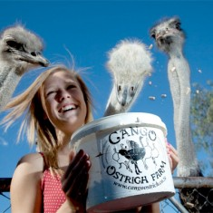 Hotspots2c Cango Ostrich Farm