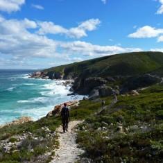 whale-trail